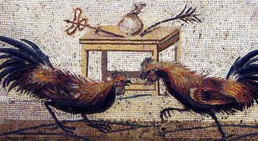 Chọi gà ở La Mã