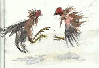 cockfightint in phi (Urban Sketchers)